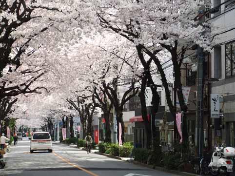 桜並木01.jpg