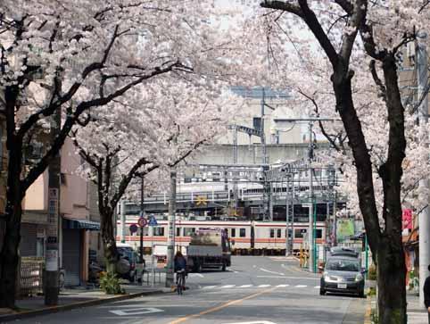 桜並木03.jpg
